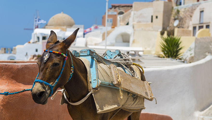 Greek-donkey-in-Santorini